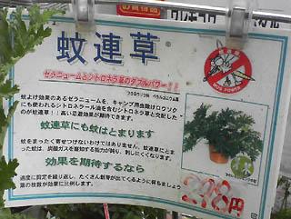 蚊連草(せつめい)