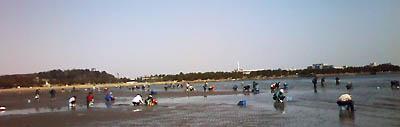 潮干狩りの風景