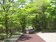 上の散歩道