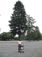小田原城の木