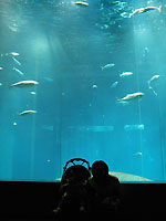 葛西水族園3
