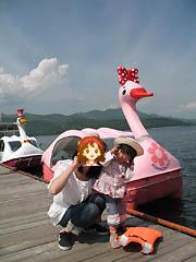 山中湖のスワン